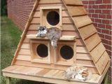 Heated Cat House Plans Domiki Dlya Koshek Dom Mechty