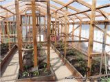 Home Built Greenhouse Plans Greenhouse Guide to Build A Wood Greenhouse at Home All