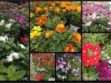 Home Depot Vertical Garden Plans Vertical Garden Project Buying the Materials Digin A