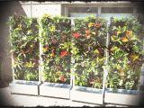 Home Depot Vertical Garden Plans Vertical Wall Garden Kits Plants On Walls Systems Modular