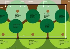 Home orchard Plan Fruit Tree Guild Plans Eat Close to Home
