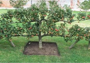 Home orchard Plan How to Plan An orchard Hgtv