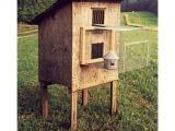 Homing Pigeon Loft Plans 15 Best Pigeon Lofts Images On Pinterest Homing Pigeons