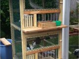 Homing Pigeon Loft Plans 25 Best Ideas About Pigeon Cage On Pinterest Macaw Cage