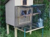 Homing Pigeon Loft Plans Click to See Full Size Image Pigeon Coop Pinterest