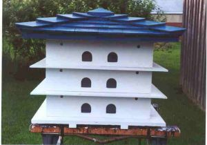 Large Bird House Plans Large Bird House Plans Free Enthusiastic55zuw