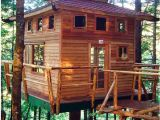 Large Tree House Plans How to Build A Tree House Building Tips the Family