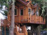 Livable Tree House Plans Casa Na Arvore 60 Modelos Para Adultos E Criancas