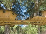 Livable Tree House Plans Fancy Treehouses