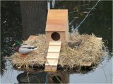 Mallard Duck House Plans 17 Best Images About Ducks On Pinterest Water Jugs