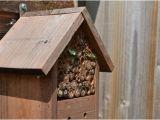 Mason Bee House Plans Bamboo Random Ramblings Leaf Cutter and Mason Bees and Bamboo Homes