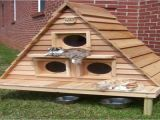 Outdoor Cat House Plans Cat House Plans Indoor Bestsciaticatreatments Com