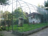 Peacock Housing Plans Macaw Aviary at Vogelpark Leopoldshafen Birds