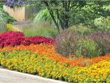 Perennial Flower Bed Plans for Front Of House Full Sun Perennial Garden Flower Bed Ideas for Full Sun