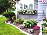 Perennial Flower Bed Plans for Front Of House Plant Thieves Prey On Burlington Gardeners Ghost Of Midnight