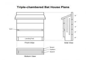Plans for A Bat House How to Make A Bat House Get Rid Of Those Bugs Insects