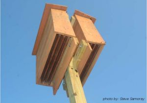 Plans for A Bat House the Benefit Of Bats In the Landscape