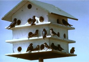Quail House Plans Free Awesome Dove Bird House Plans New Home Plans Design