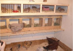 Quail Housing Plans Coturnix Quail Housing
