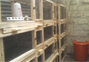 Quail Housing Plans Quail Farming In Kenya Urbanshamba
