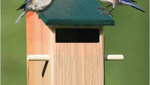 Sparrow Resistant Bluebird House Plans Duncraft Com Duncraft Sparrow Resistant Bird House