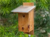 Sparrow Resistant Bluebird House Plans Sparrow Bird House Plans