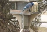 Squirrel Proof Bird House Plans Squirrel Baffle Bird Feeder Plans and Squirrel Proof Bird
