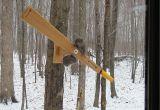 Squirrel Proof Bird House Plans Wooden Squirrel Proof Bird Feeder Plans Plans Diy Free