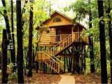 Tree House Plans for Sale Livable Tree Houses for Sale for Adults Best House Design