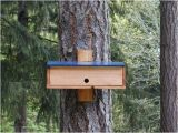Winter Bird House Plans Nighttime Shelter for Winter Birds Plans to Build A Bird