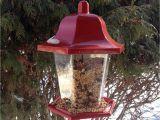 Winter Bird House Plans Winter Bird House Plans Liveideas Co