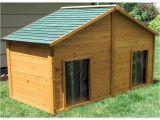 X Large Dog House Plans Shop X Large Cedar Insulated Duplex Dog House at Lowes Com